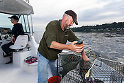 WA11860-00...WASHINGTON - Lee Hamilton pilots the boat as Jim Johansen loads a bait tube into a shrimp pot while fishing on the Puget Sound. (MR# J5-H14)