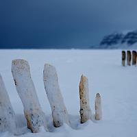 Spitsbergen whale bones