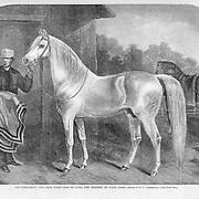 vintage illustration: Arab Horse, Calif of Cairo. Harper's Weekly 1860