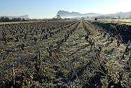 France, Languedoc Roussillon, Hérault, le Pic Saint Loup et la montagne de l'Hortus