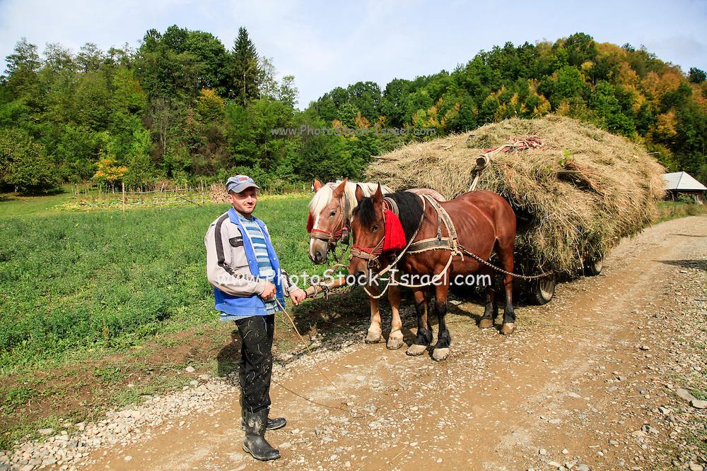 horse drawn cart full of hay Maramures County, Romania