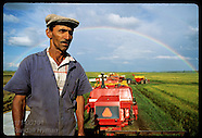 BRAZIL 20111: RICE FARM