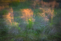 Abstract of a forest and pond during the Springtime season in Florida
