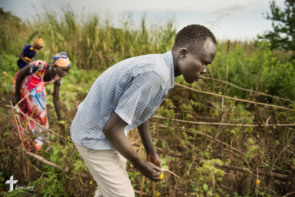 Men and women gather fresh produce from a vegetable garden on Wednesday, Sept. 23, 2015, at the Leitchour Refugee Camp outside Gambela, Ethiopia. LCMS Communications/Erik M. Lunsford