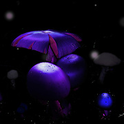 A fantasy world with florescent fungi, fairies, orbs and other mystical beings.