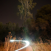 Light from the Folsom Automall LED Ad Board illuminates this tall Pine across Highway 50. Folsom, CA