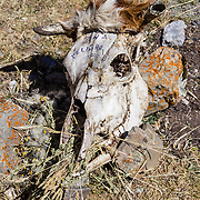 "A wigged cow skull says ""zona peligro"" (danger zone) in Huanacpatay Valley, Cordillera Huayhuash, Andes, Peru, South America. Day 6 of 9 days trekking around the Cordillera Huayhuash."
