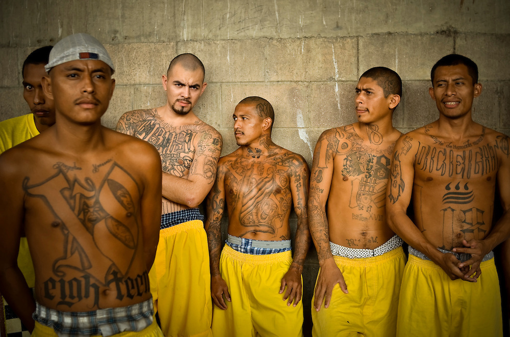 scholarly essays on gangs in america