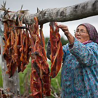 Vera Spein hangs salmon to dry at her fish camp near Kethluk, Alaska