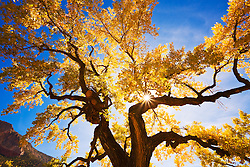 Fall color in the Jemez Mountains of New Mexico.
