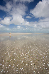 A lone visitor on 80 Mile Beach south of Broome in the wet season.  80 Mile beach is rich in shells, with a wealth of marine detritus washing up after cyclones.