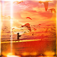 SARASOTA, FL -- A child chases seagulls along Turtle Beach in Sarasota. (PHOTO / CHIP LITHERLAND)