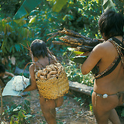 Slash-and-burn agriculture by Indians of Guiana Highlands of Venezuela: woman and daughter returning from garden with harvest of firewood, sweet potatoes, cotton.
