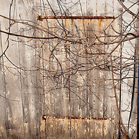 Old white barn with vines over a door.