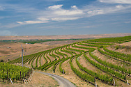 Woodward canyon's vineyard, Walla Walla AVA, Washington