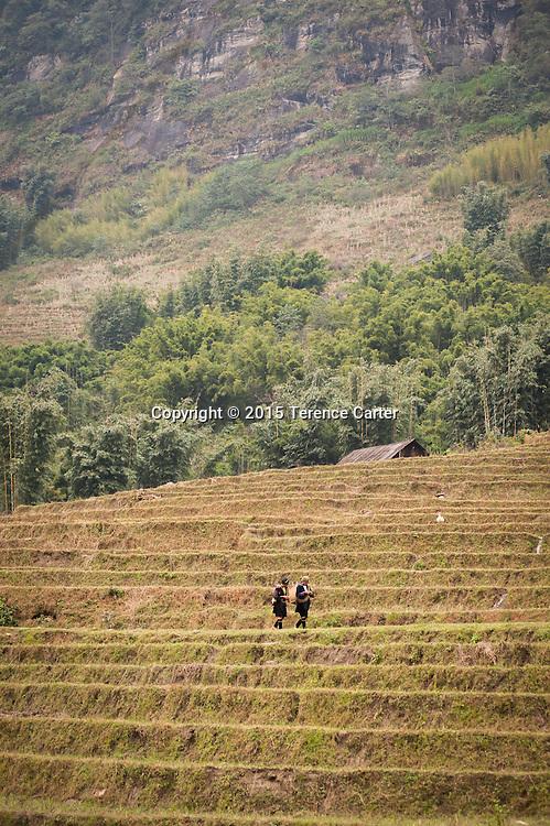 Hilltribe girls walk through the terraced rice fields above Sapa, Vietnam.