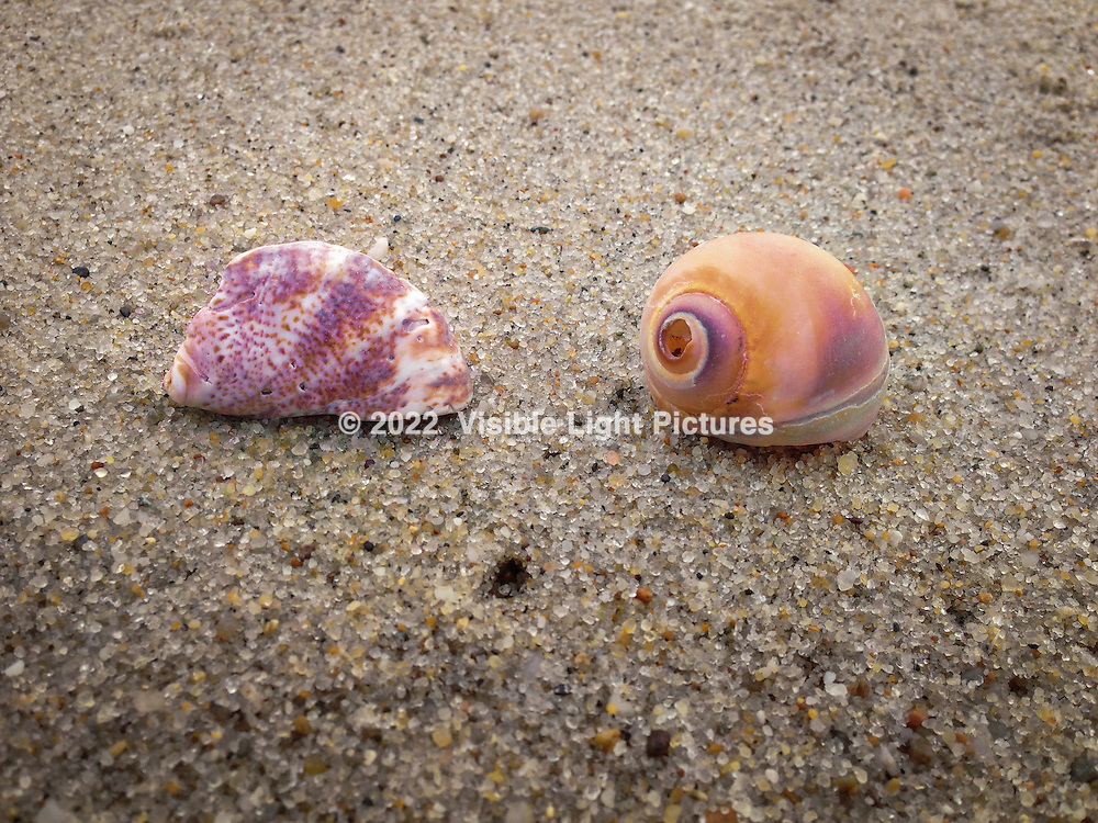 Two shells on a beach in Nantucket