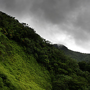 The El Yunque rain forest in Puerto Rico.