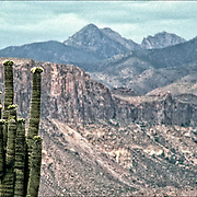 Cactus in foreground and mountain in background, AZ