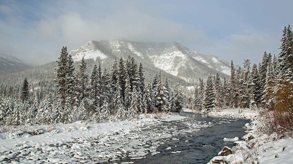 An early Spring snowfall blankets the pines beneath Sleeping Giant Mountain in the Shoshone National Forest.