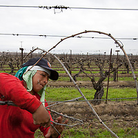 Campesinas work the fields tying grape vines near Fresno, California.