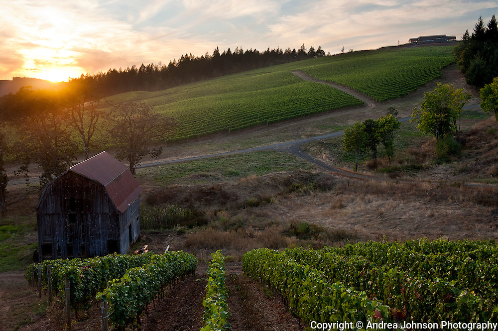 Colene Clemens estate vineyard and winery, Yamhill-Carlton, Willamette Valley, Oregon