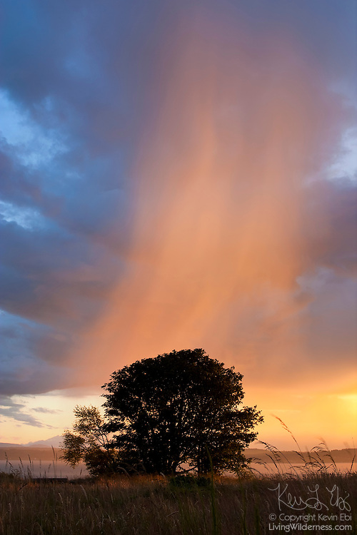 The setting sun illuminates the virga from a cumulonimbus cloud over Puget Sound, Seattle, Washington. Cumulonimbus clouds always produce rain, but sometimes it evaporates before reaching the ground, which is known as virga.