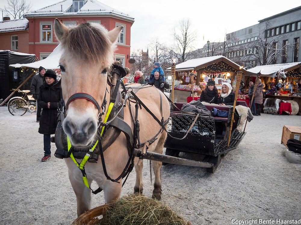 Fjording, kanefart på Julemarkedet i Trondheim