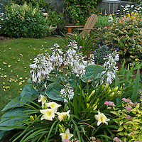 hosta and daylilies in the foreground with an Adirondack chair behind