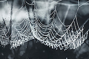 Thaw drops in a spider's web - monochrome textured photograph