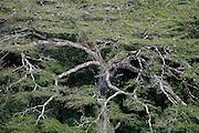 Cristalino State Park, Alta Floresta, Mato Grosso, Brazil, March 18, 2009.