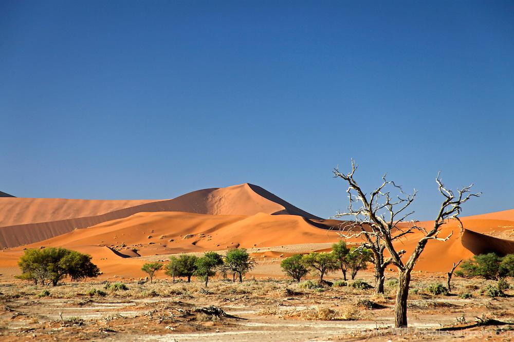 Africa, Namibia, Sossusvlei.