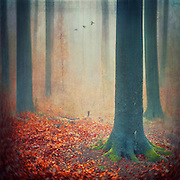 Beech tree forest in fall - digitally manipulated photograph with textures.
