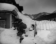 An elderly man works alone to clear snow from his property.  Even lower down the mountain, it is a dangerous task for seniors to clear snow from their walkways and rooftops.   Okawara, Aomori Prefecture, Japan.