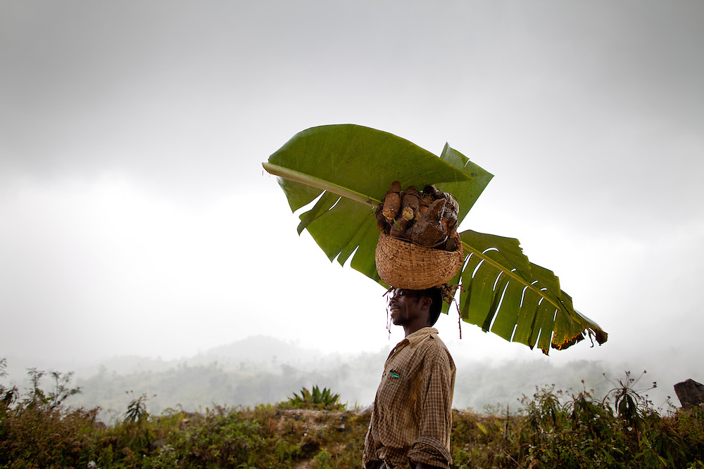 Eric Dorlis uses a leaf for shelter from the rain as he carries yams home from his garden. The Inter-American Development Bank is funding a road project in the south of Haiti, aiming to cut travel time and transportation costs, and to improve living conditions in the southern provinces. This 50-mile stretch of road connects the small cities of Les Cayes and Jeremie and many rural villages in between. A Brazilian company, OAS, is doing the construction. The road is far from complete, but is already transforming commerce and daily life in the area. Travel time has been cut in half; fewer trucks are breaking down, so less food is spoiled; and farmers are planting more crops in anticipation of more dependable farm-to-market transportation.