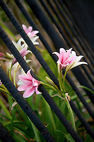 flowers sticking through the fence at St. Louis Cathedral in New Orleans, Louisiana