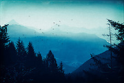 View of the misty Valmalenco/Lombardia/Italy at sunrise - texturized photograph<br /> <br /> Prints &amp; more:https://society6.com/product/blue-valmalenco-alps-at-sunrise_print#1=45