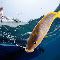 Marine and Freshwater