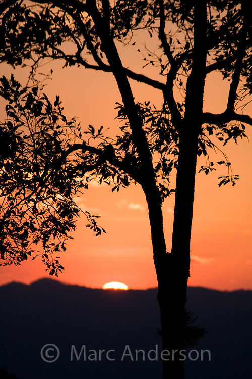 Tree silhouette at sunset, Kaeng Krachan National Park, Thailand