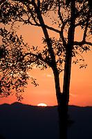 Tree silhouette at sunset, Kaeng Krachan National Park, Thailand