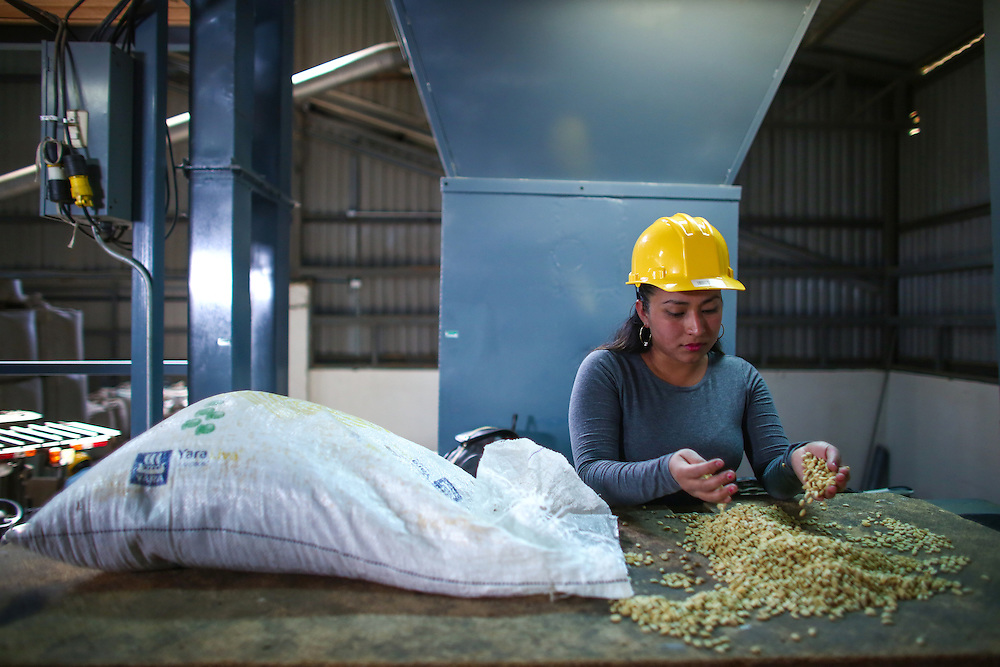 Coffee is sorted by hand at Hacienda Alsacia during the 2016 Starbucks Origin Experience for Partners. Photographed in January 2016. (Joshua Trujillo, Starbucks)<br /> <br /> ***model released***