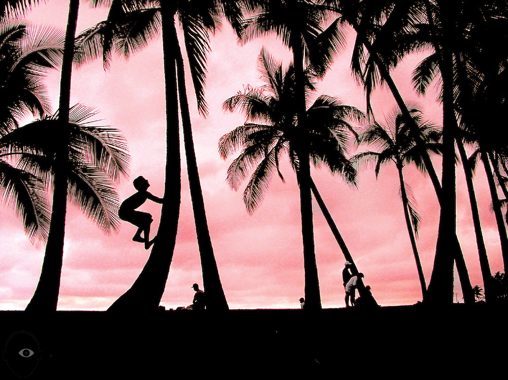 A young boy climbs up the trunk of a coconut palm while spending time about sunset at the Black Sand Beach on the Big Island of Hawaii.