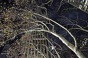 USA New York Manhattan Bryant Park aus der Serie Night Vision Nacht Nachtaufnahme