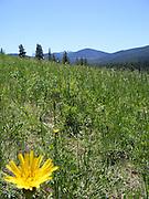 Mountain Landscape with Dandelion