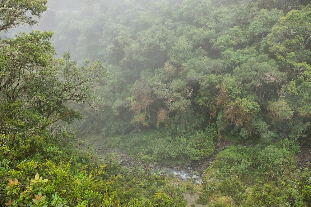 South America; Peru; Amazonia; Manu; National Park; UNESCO; World Heritage; cloud forest in Manu