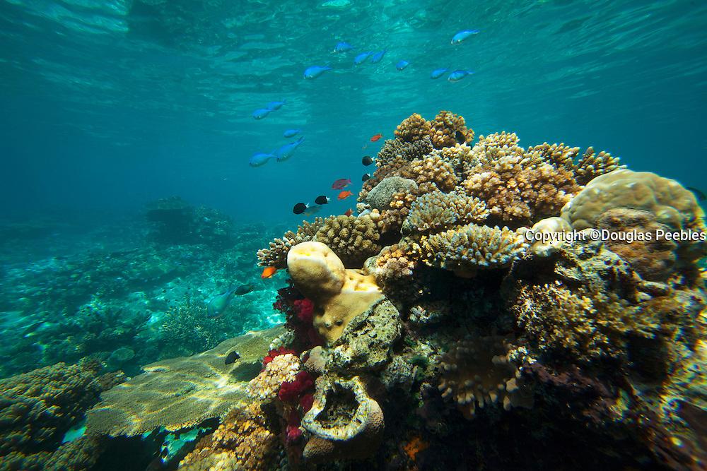 Rainbow Reef, Vanua Levu, Fiji