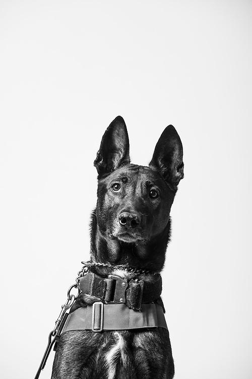 Bono<br /> Air Force<br /> K9<br /> Security Forces, K9<br /> Present<br /> <br /> Veterans Portrait Project<br /> 802d Security Forces Squadron<br /> San Antonio, TX