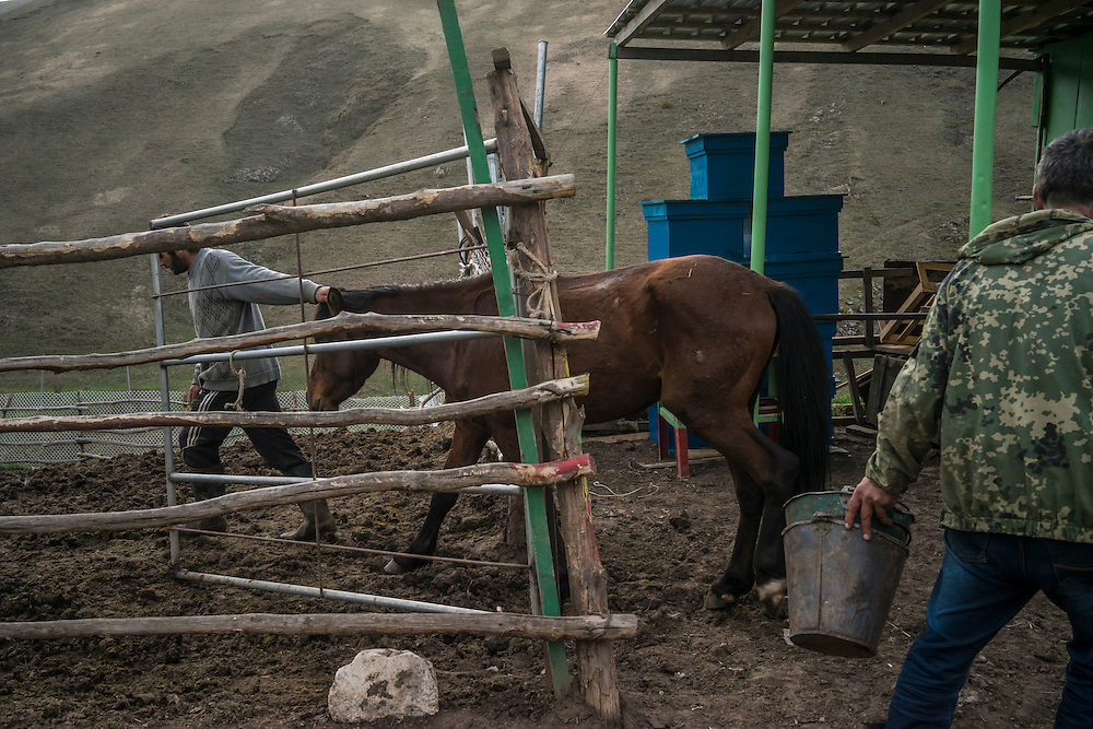 VANK, NAGORNO-KARABAKH - APRIL 22: Gevorg Akulyan (L), 24, leads a Karabakh horse, a breed originally developed in the region which is now faced with extinction, back from being out at pasture as Vazgen Baghdasaryan, 55, does other chores on a farm in the mountains on April 22, 2015 near Vank, Nagorno-Karabakh. Since signing a ceasefire in a war with Azerbaijan in 1994, Nagorno-Karabakh, officially part of Azerbaijan, has functioned as a self-declared independent republic and de facto part of Armenia, with hostilities along the line of contact between Nagorno-Karabakh and Azerbaijan occasionally flaring up and causing casualties. (Photo by Brendan Hoffman/Getty Images) *** Local Caption *** Gevorg Akulyan;Vazgen Baghdasaryan