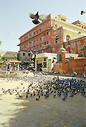 pigeons feeding in square