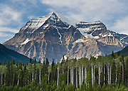 Aspen trees grow on Mount Robson (3954 meters or 12,972 feet in the Rainbow Range), the highest point in the Canadian Rockies. Mount Robson Provincial Park (in British Columbia, Canada) is part of the Canadian Rocky Mountain Parks World Heritage Site declared by UNESCO in 1984.